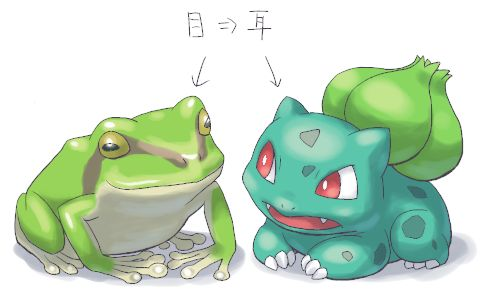 dane-frog